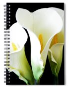Three Calla Lilies On Black Spiral Notebook