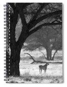 Three Cheetahs Spiral Notebook