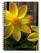 Three Dahlias Spiral Notebook