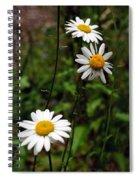 Three Daisies Spiral Notebook