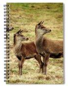 Wildlife Three Red Deer Spiral Notebook