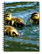 Three Ducklings Spiral Notebook