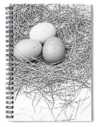 Three Eggs In A Nest Black And White Spiral Notebook