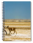 Three Goats In A Desert Spiral Notebook
