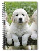 Three Golden Retriever Puppies Spiral Notebook