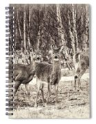 Three In The Field Spiral Notebook