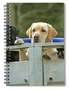 Three Kinds Of Labradors Spiral Notebook