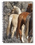 Three Long Tails Spiral Notebook