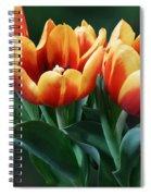 Three Orange And Red Tulips Spiral Notebook