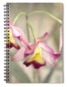 Three Orchid Beauties Spiral Notebook