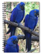 Three Pals Spiral Notebook