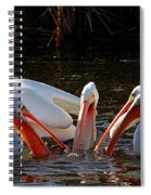 Three Pelicans And A Fish Spiral Notebook