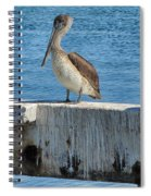 Three Pelicans Spiral Notebook