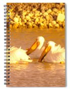 Three Pelicans Fishing Spiral Notebook