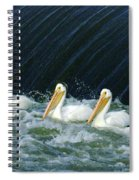 Three Pelicans Hanging Out  Spiral Notebook