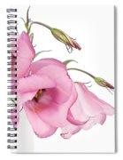 Three Pink Lisianthus Flowers Spiral Notebook