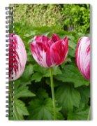 Three Pink Rembrandt Tulips Spiral Notebook
