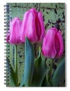 Three Pink Tulips Spiral Notebook