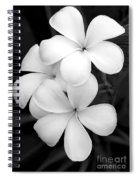 Three Plumeria Flowers In Black And White Spiral Notebook