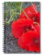 Three Poppies Too Spiral Notebook