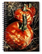 Three Pumpkins Spiral Notebook