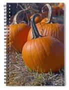 Three Pumpkins Spiral Notebook