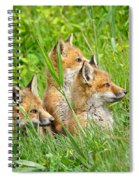 Three Red Fox Pups Spiral Notebook
