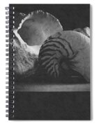 Three Seashells Spiral Notebook
