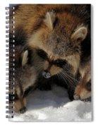 Three Sweet Raccoons Spiral Notebook
