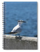 Three Turning Terns Spiral Notebook
