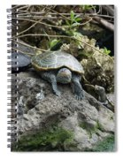 Three Turtles Spiral Notebook