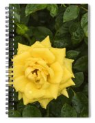 Three Yellow Roses In Rain Spiral Notebook