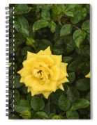 Three Yellow Roses Spiral Notebook