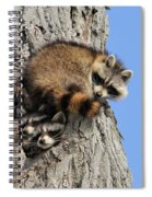 Three Young Raccoons Spiral Notebook