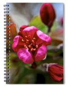 Through Time And Space Spiral Notebook