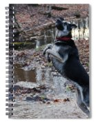 Throwing Stones Spiral Notebook