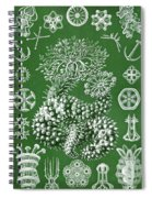 Thuroidea From Kunstformen Der Natur Spiral Notebook