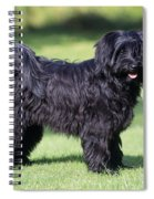 Tibetan Terrier Dog Standing Spiral Notebook