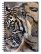 Sumatran Tiger-5418 Spiral Notebook