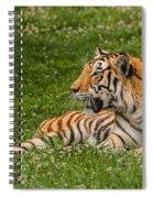 Tiger At Rest 3 Spiral Notebook