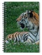Tiger At Rest 4 Spiral Notebook