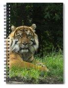 Tiger At Rest Spiral Notebook