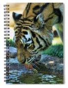 Tiger Drinking Water Spiral Notebook