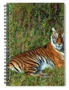 Tiger In The Grass Spiral Notebook