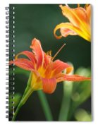 Tiger Lily And Bud   # Spiral Notebook
