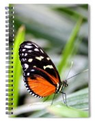 Tiger Longwing Butterfly Spiral Notebook