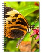 Tiger Mimic Butterfly Spiral Notebook