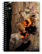 Tiger Moth Flight Spiral Notebook