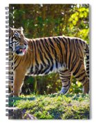 Tiger On The Prowl Spiral Notebook