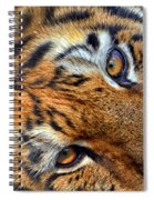 Tiger Peepers Spiral Notebook